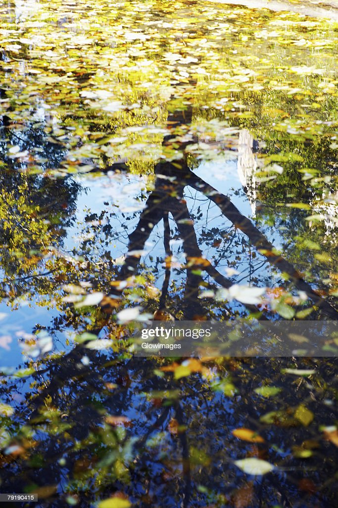 Reflection of a tree in water : Stock Photo