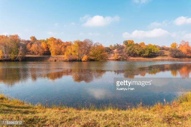 reflection of autumn color in a lake - flussufer stock-fotos und bilder
