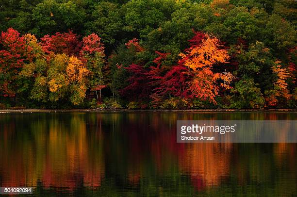 reflection of autumn colors in lake, rhode island - providence rhode island stock photos and pictures
