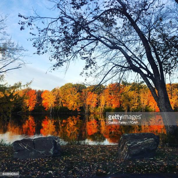 reflection of autumn trees on lake - gabby allen stockfoto's en -beelden