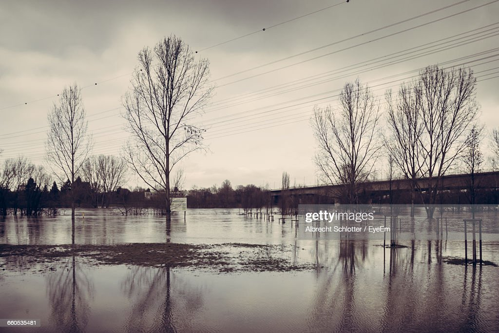 Reflection Of Bare Trees In Flooded Field : Stock-Foto