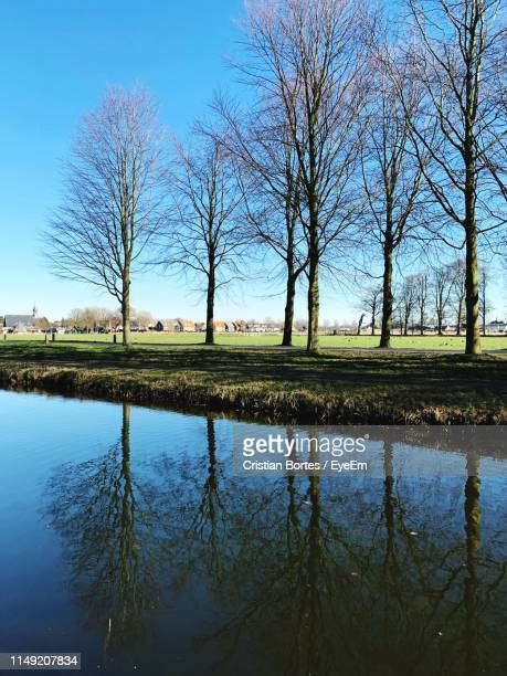 reflection of bare trees in lake against sky - bortes foto e immagini stock
