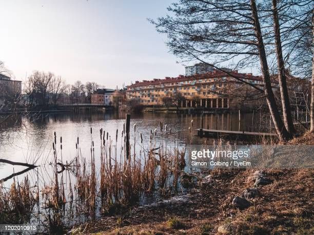 reflection of bare trees in lake against sky - colbing stock pictures, royalty-free photos & images