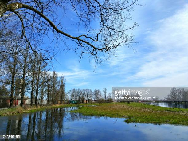 reflection of bare trees in water - anastasi foto e immagini stock