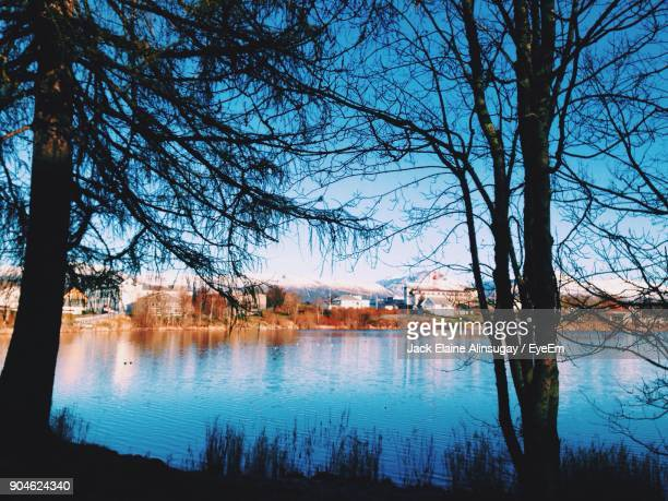 Reflection Of Bare Trees In Water
