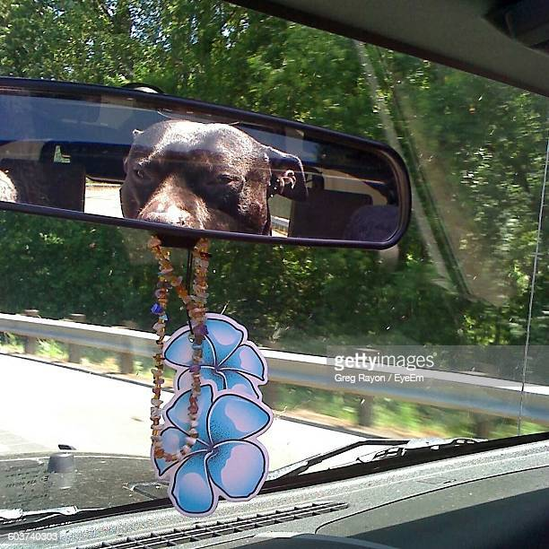 Reflection Of Black Dog On Car Mirror