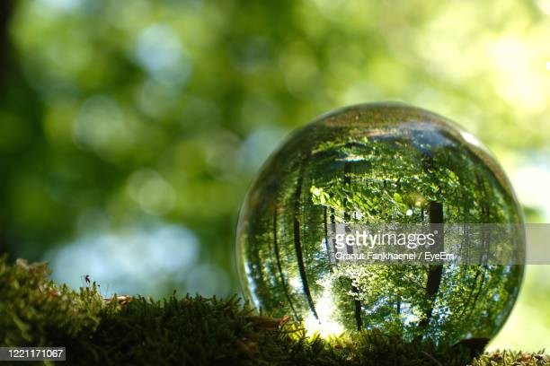 reflection of bright young green spring leaves, trees and moss inside lensball. - sustainability stock pictures, royalty-free photos & images