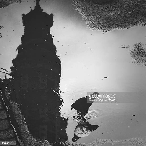 reflection of building and bird in puddle - pomorskie province stock photos and pictures