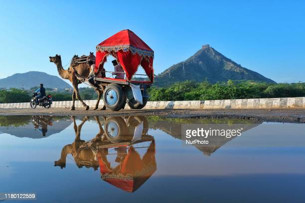 Reflection of camelcart while cross the street during the Pushkar Fair Rajasthan India Nov 05 2019 Thousands of livestock traders from the region...