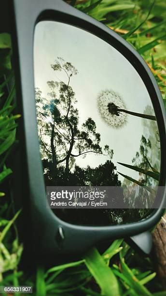 reflection of dandelion and trees against clear sky on sunglasses - carvajal stock photos and pictures