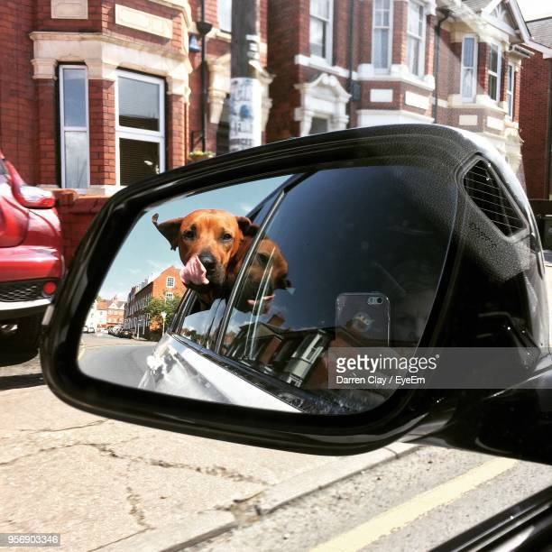 Reflection Of Dog In Side View Mirror