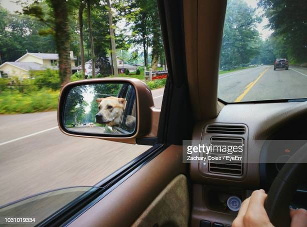 Reflection Of Dog On Car Side-View Mirror Against Trees