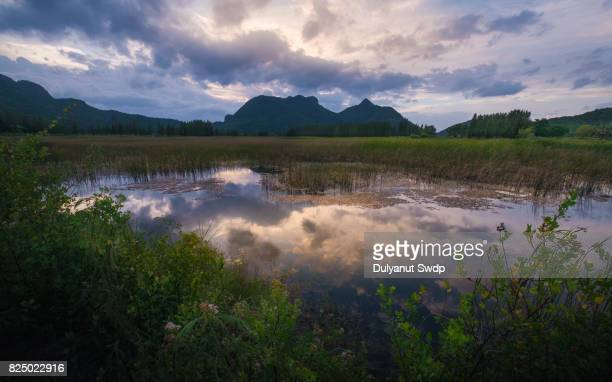 reflection of dramatic sky at wetland park , thailand - salt_marsh stock pictures, royalty-free photos & images