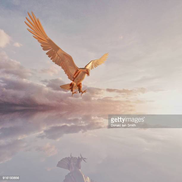 Reflection of eagle flying in clouds
