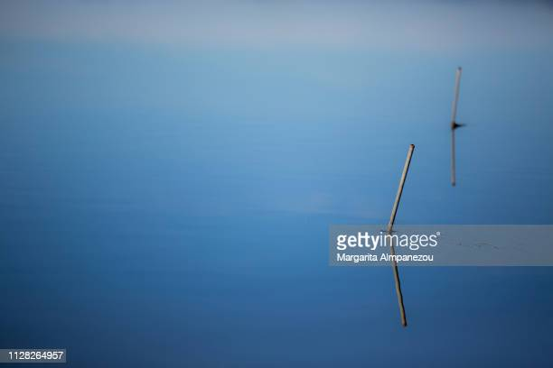 Reflection of fishing poles in the clear blue water