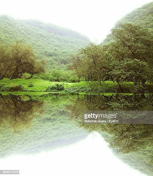 Reflection Of Forest Trees And Mountains In Lake Water