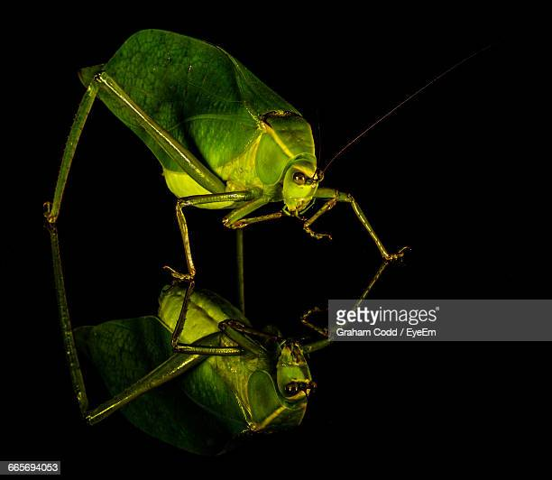 reflection of grasshopper on glass - grasshopper stock pictures, royalty-free photos & images