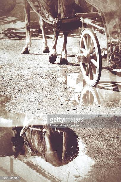 Reflection Of Horse Cart In Puddle