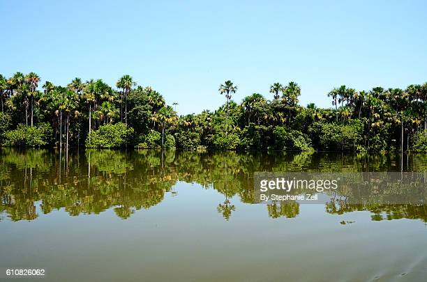 Reflection of Jungle Forest in Amazon