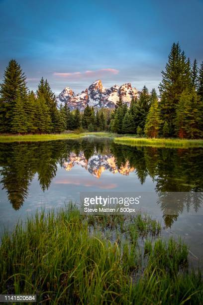 reflection of landscape with forest and snowcapped mountains - steve matten stock pictures, royalty-free photos & images