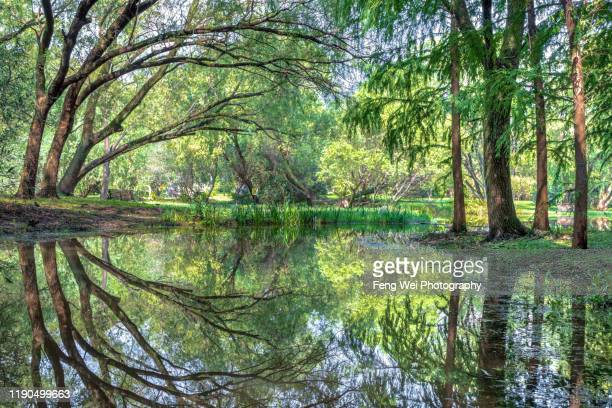 reflection of lush forest, gongqing national forest park, shanghai china - shanghai stock pictures, royalty-free photos & images