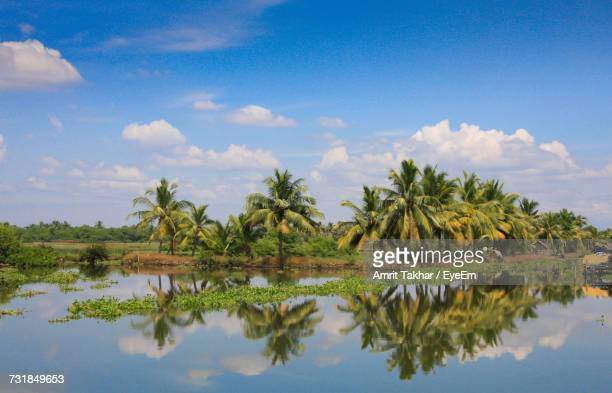 reflection of palm tree in lake against blue sky - kochi india stock pictures, royalty-free photos & images