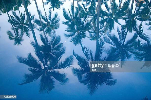 reflection of palm tree in pool
