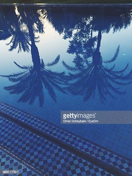 reflection of palm trees in calm pool - marrakech photos et images de collection