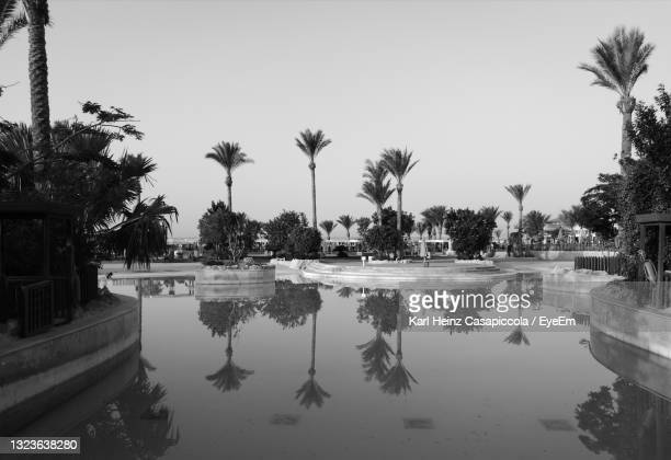 reflection of palm trees in swimming pool against clear sky - casapiccola stock-fotos und bilder