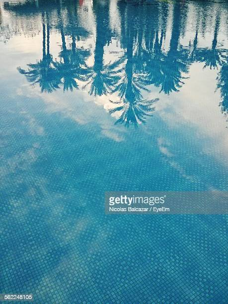 reflection of palm trees in swimming pool - marrakech photos et images de collection