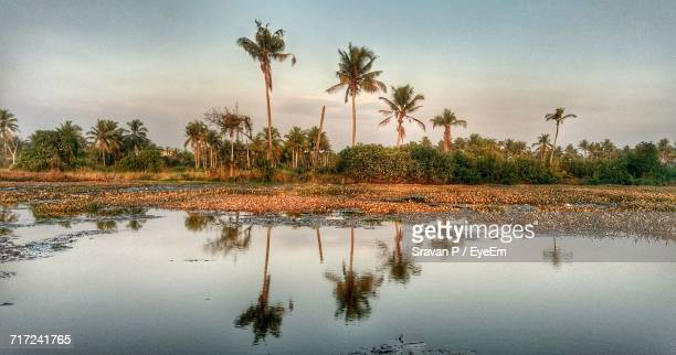 Reflection Of Palm Trees On Water Against Sky