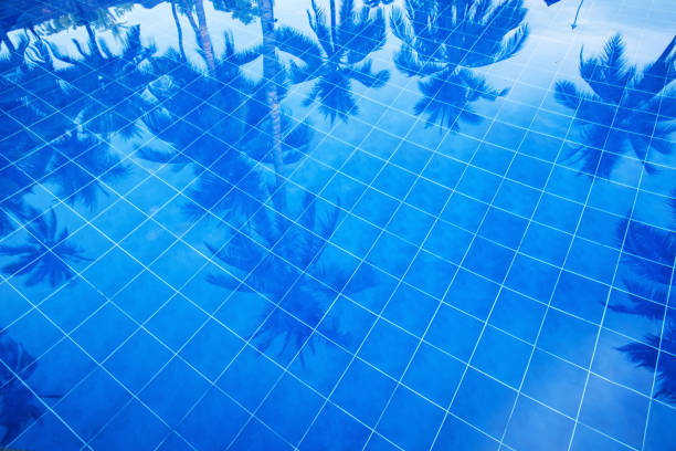 Reflection of palm trees over swimming pool