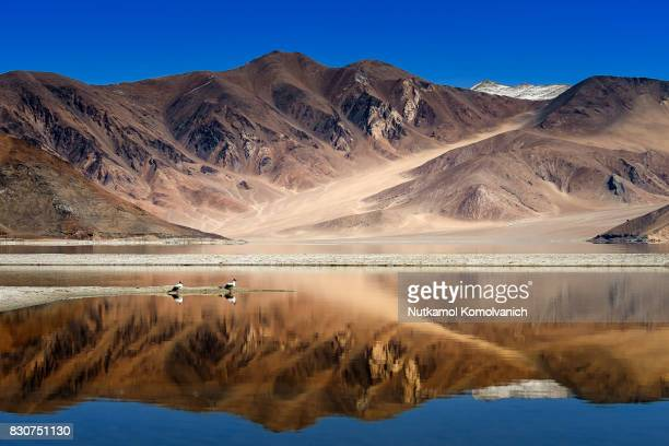 Reflection of pangong lake with couple of seagull