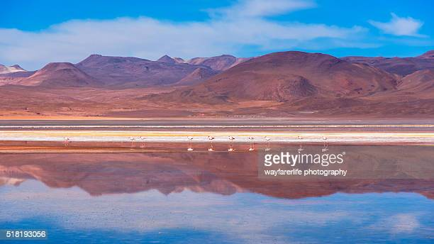 A reflection of pink flamingo over red lagoon in Bolivia.