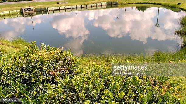 reflection of plants in calm water - princess anne princess royal photos stock pictures, royalty-free photos & images