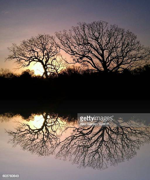 reflection of silhouette bare trees on lake at sunset - suarez stock pictures, royalty-free photos & images