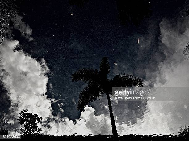 Reflection Of Silhouette Trees And Sky On Puddle