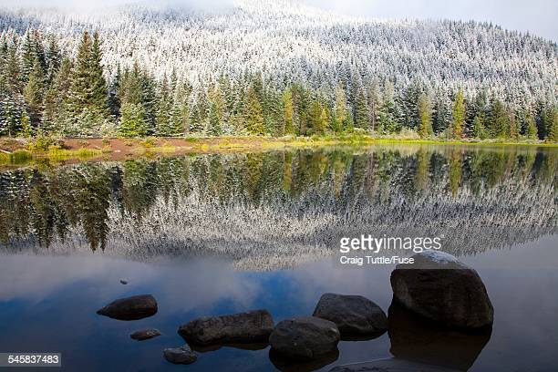 reflection of snowy forest on lake in mount hood national forest - mt hood national forest stock pictures, royalty-free photos & images