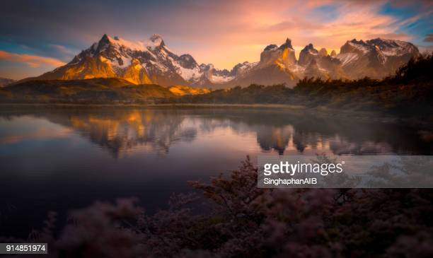 reflection of Torres del paine mountain in water and flowers in foreground, Patagonia