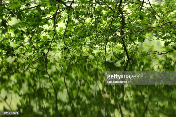 Reflection of tree branches in calm lake water
