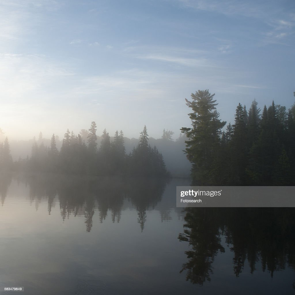 Reflection of tree in a lake : Stock Photo