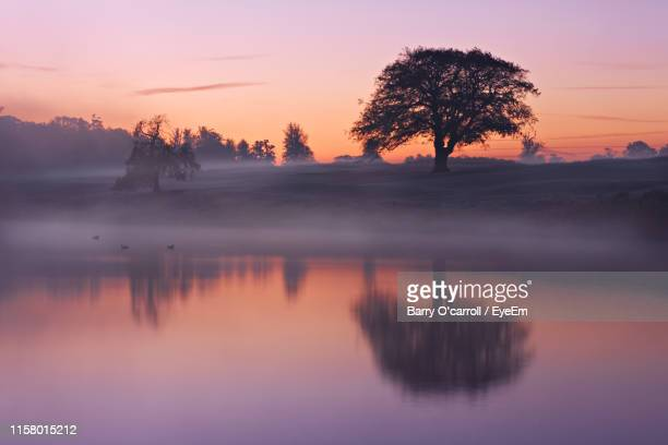 reflection of tree in lake during foggy weather at sunset - kildare stock pictures, royalty-free photos & images