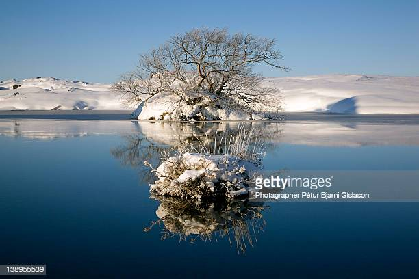 Reflection of tree in pond