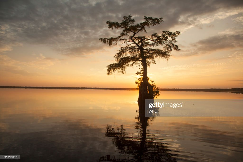 Reflection of tree in river at sunset : Stock Photo