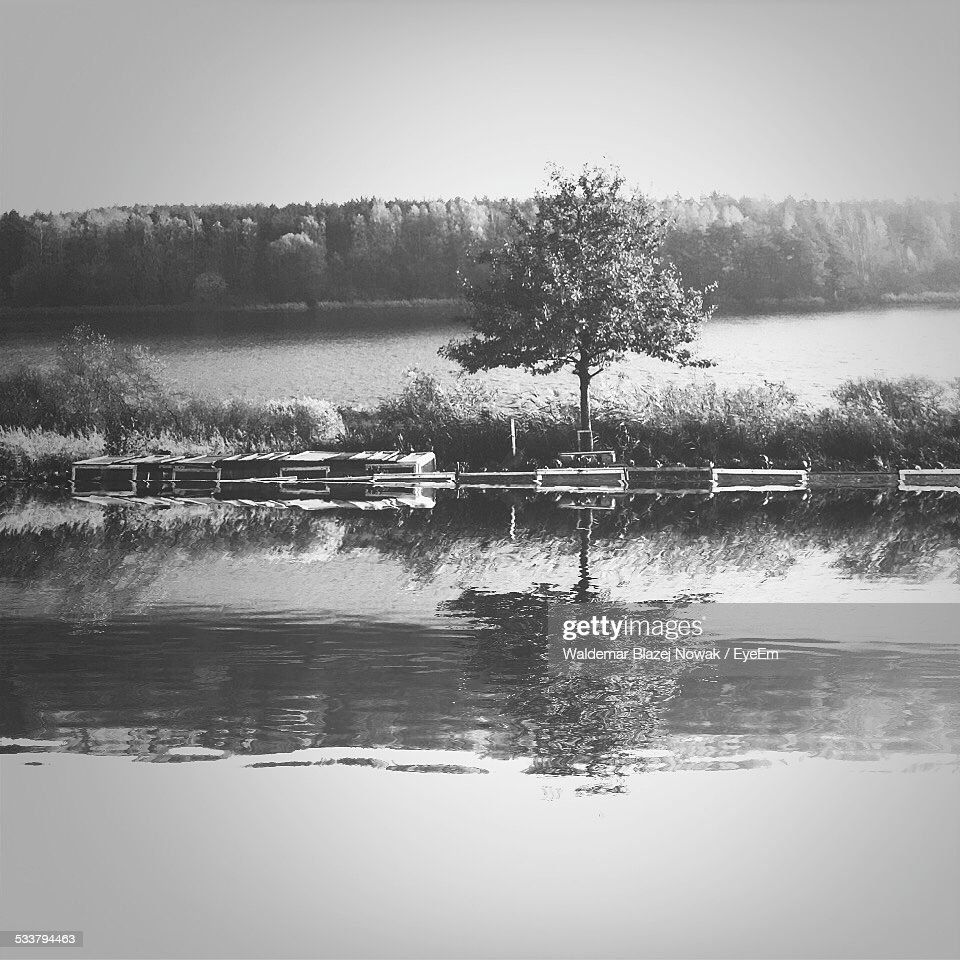 Reflection Of Tree In River : Foto stock