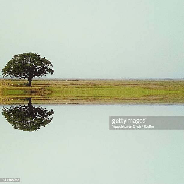 Reflection Of Tree On Lake Against Clear Sky