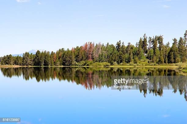 Reflection of trees along lake shoreline