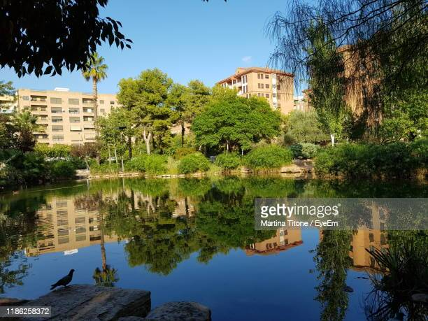 reflection of trees and buildings in lake - castellon de la plana stock pictures, royalty-free photos & images