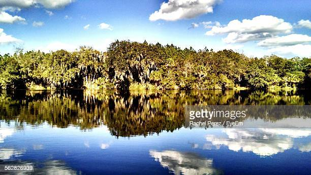 reflection of trees and sky in lake - plant city stock pictures, royalty-free photos & images