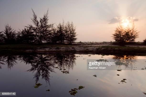 Reflection of trees at sunrise